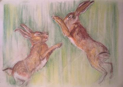 BoxingHares